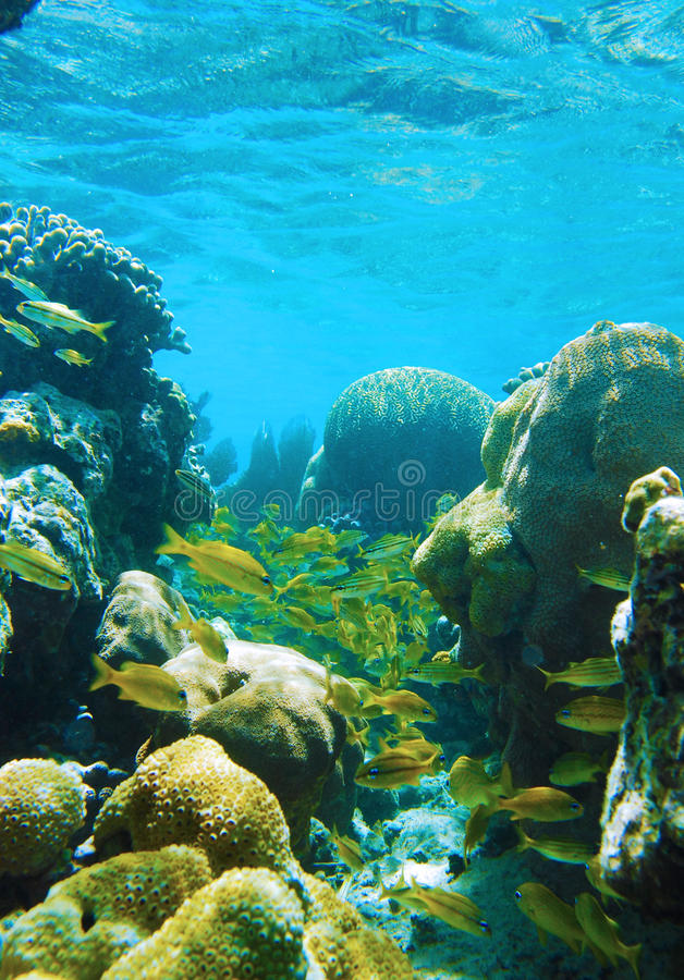 Coral subacuático fotografía de archivo