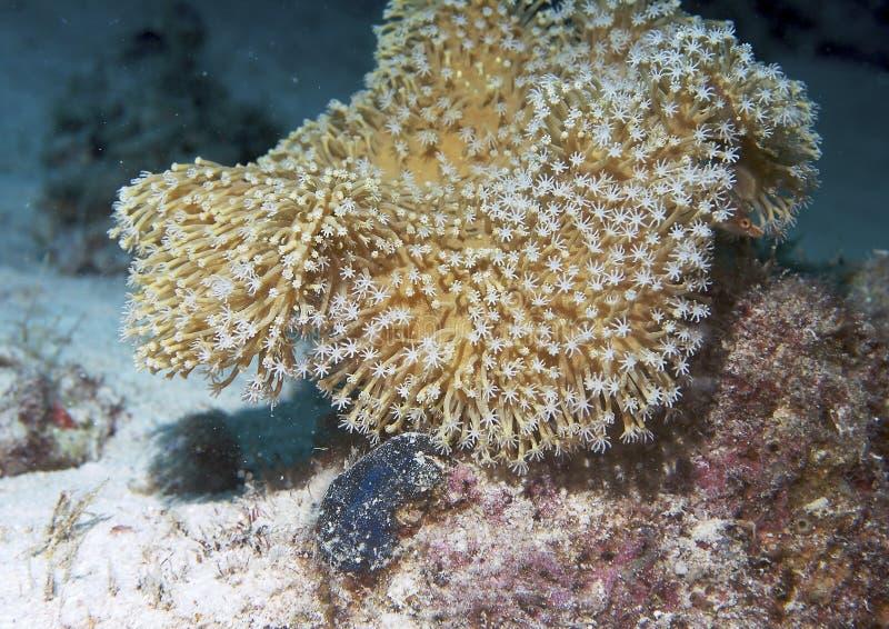Coral subaquático fotografia de stock royalty free