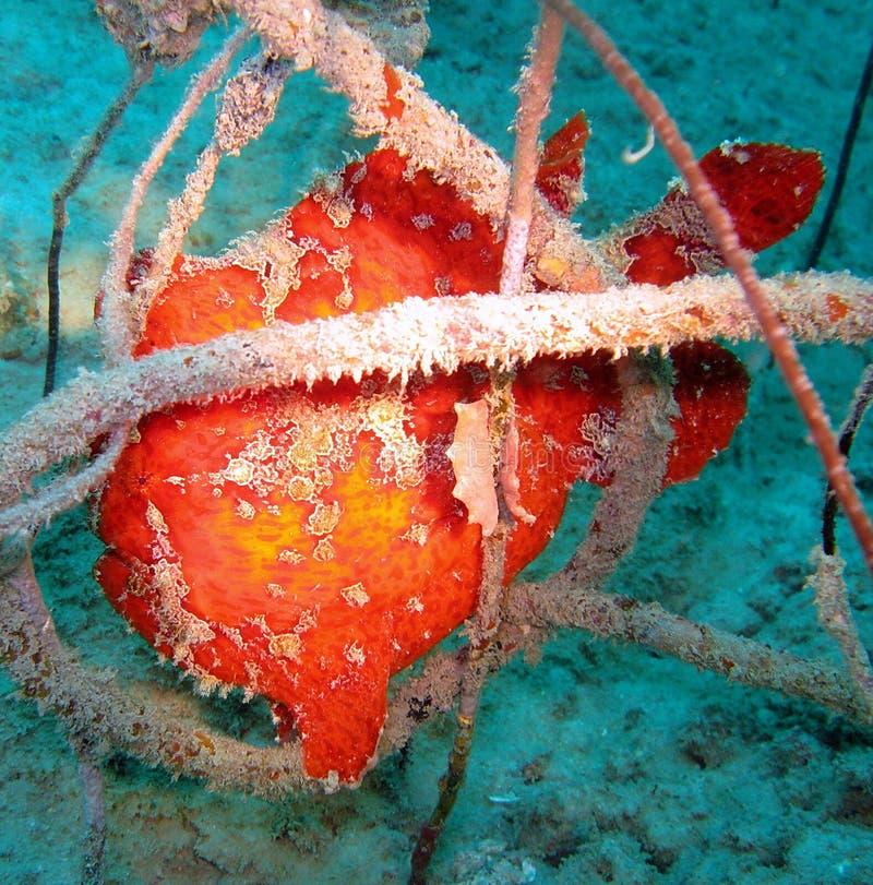 Coral subaquático imagem de stock
