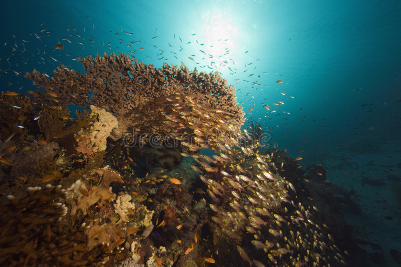 Coral, sun ocean and fish stock images