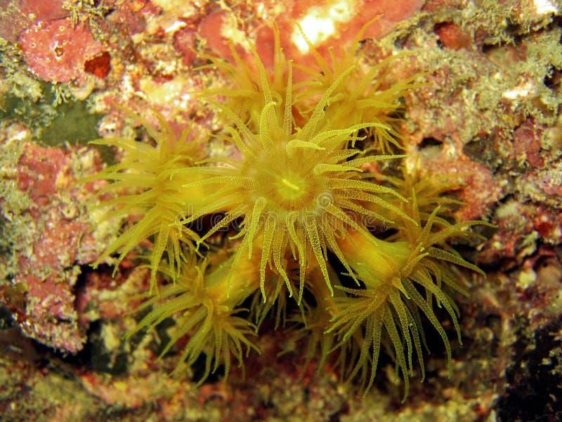 coral szczegół Faulkner s zdjęcia stock