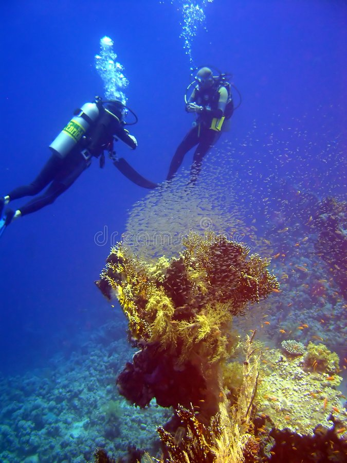Coral with tiny fish and divers stock photography