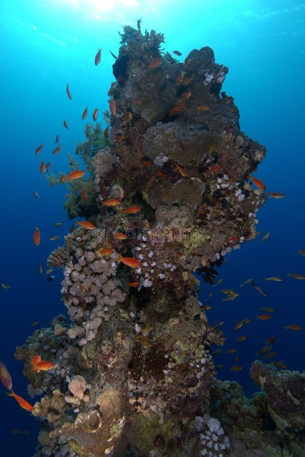 Coral Tower Underwater arkivfoton