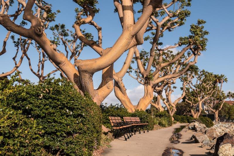 Coral Trees an der spanischen Landung in San Diego lizenzfreies stockfoto