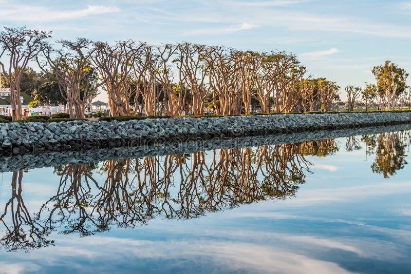 Coral Trees på Embarcadero Marina Park South i San Diego royaltyfri bild