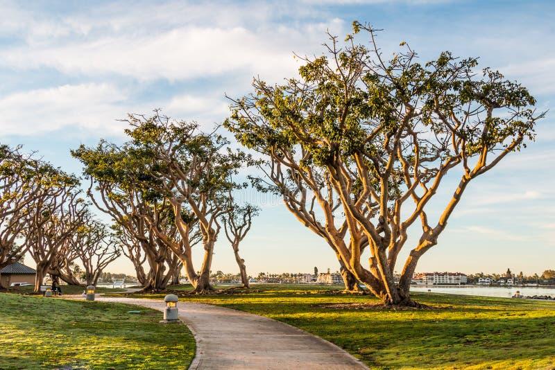 Coral Trees på Embarcadero parkerar nord i San Diego royaltyfri fotografi