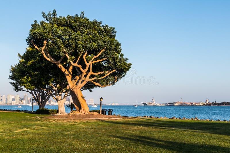 Coral Trees sull'isola del porto con San Diego Bay fotografia stock