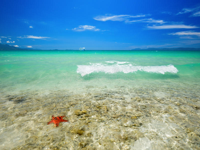 Download Coral tropical beach stock photo. Image of beautiful - 33491814