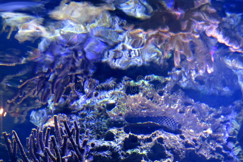 coral water texture royalty free stock photography