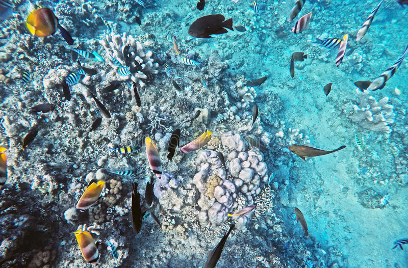 Coral Wildlife Bali Indonesia water color fish royalty free stock images