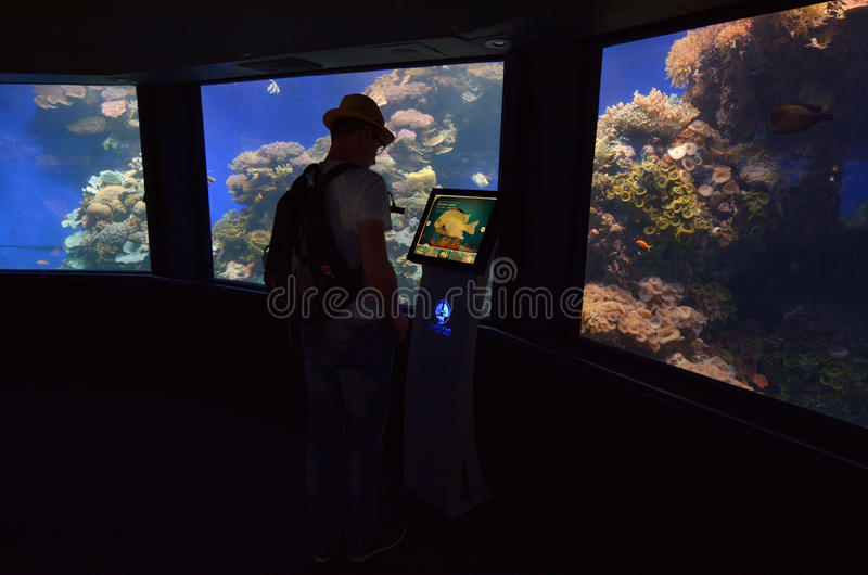 Coral World Underwater Observatory aquarium in Eilat Israel royalty free stock image