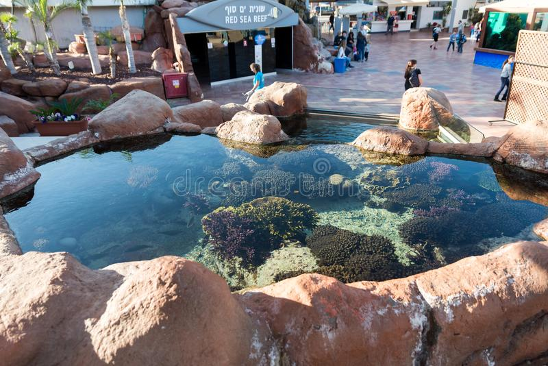 At Coral World Underwater Observatory in Eilat. Israel stock photography