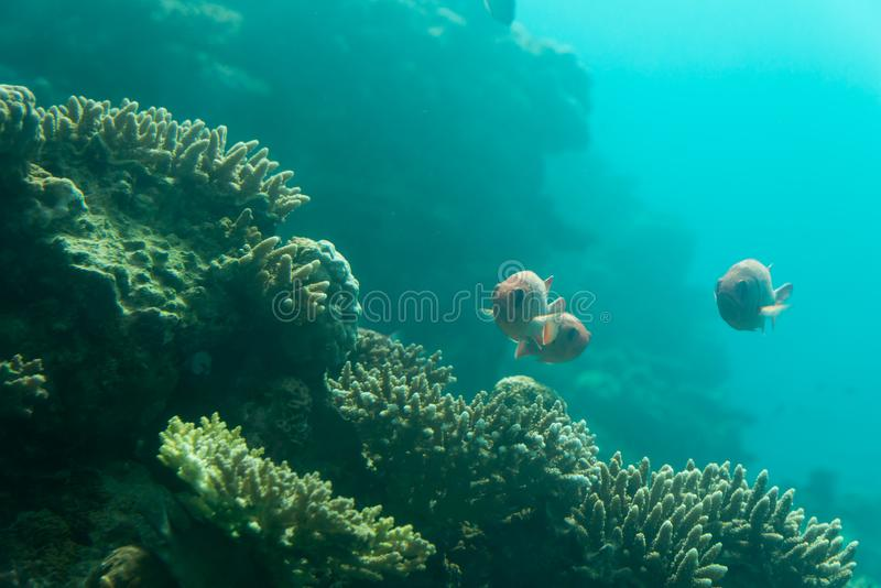At Coral World Underwater Observatory in Eilat stock images