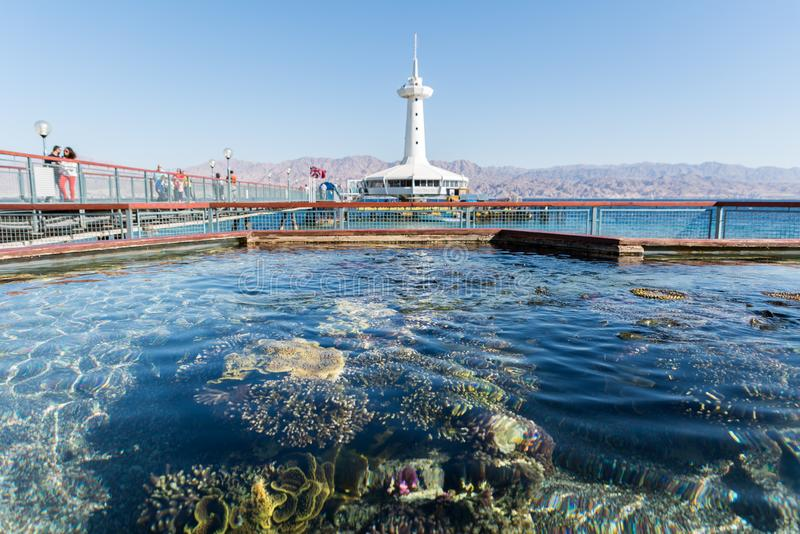 At Coral World Underwater Observatory in Eilat stock photography