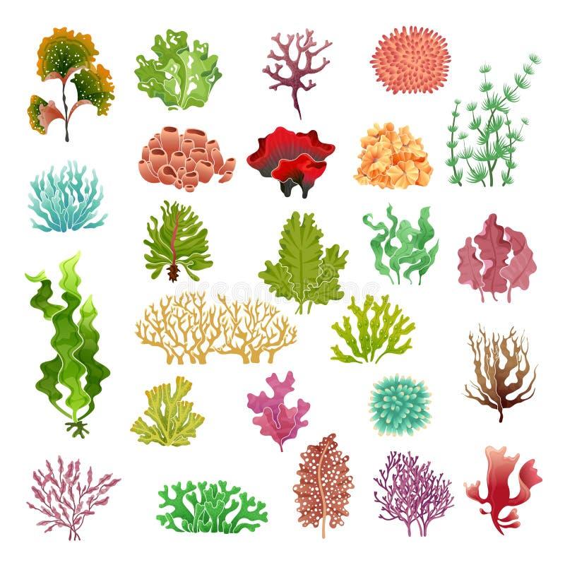 Coral y alga marina Flora subacuática, quelpo y corales del juego del acuario de las algas marinas de la agua de mar Sistema del  ilustración del vector