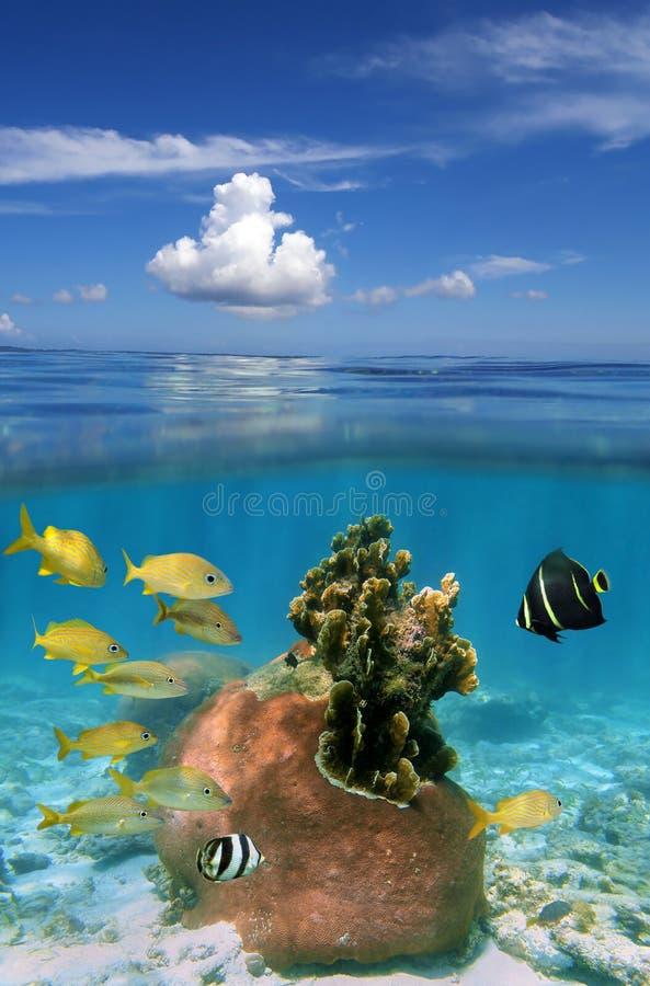 Coral y nube foto de archivo