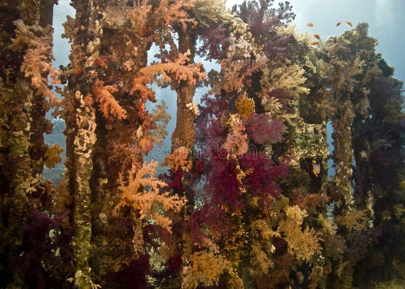 Coral y pescados fotografía de archivo libre de regalías