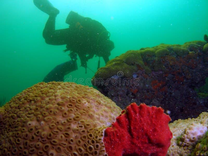 Coral y zambullidor de la estrella imagen de archivo