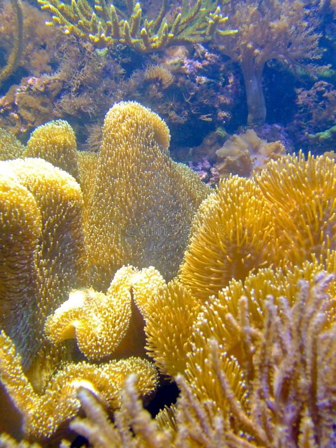 coral z alg fotografia stock