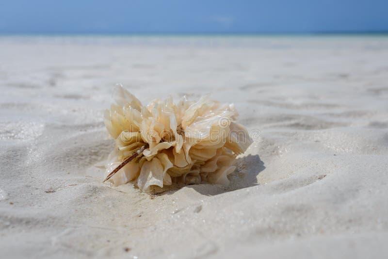 Coral Zanzibar arkivfoton