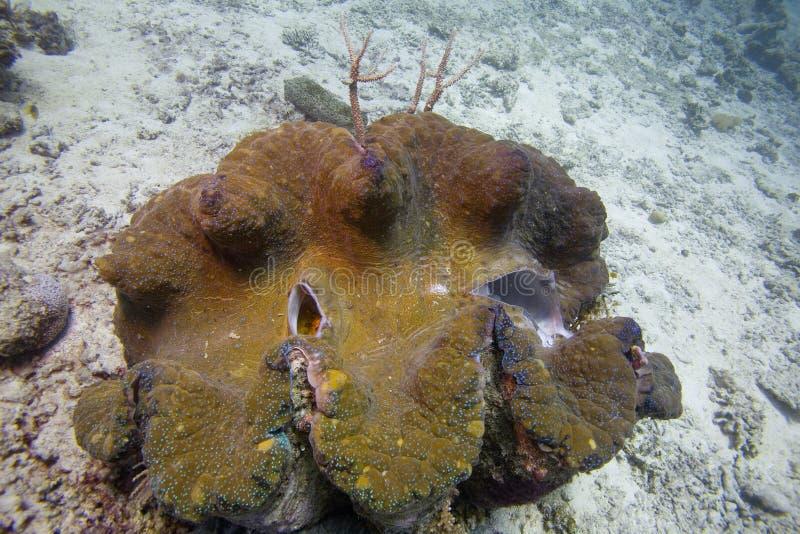 Corales australianos, plantas, criaturas subacuáticas, pescados coloridos fotos de archivo