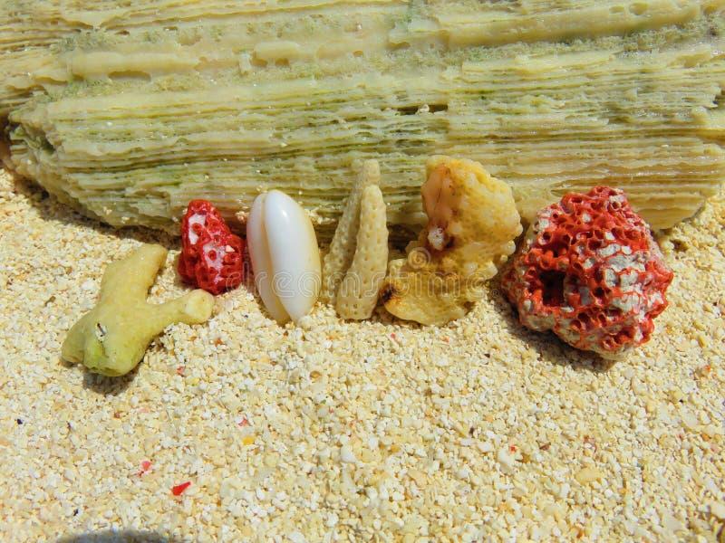 Corales de las islas de Maldivas imagen de archivo libre de regalías