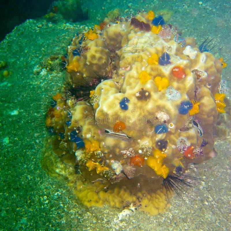 Corales en una piedra, muchos colores y pequeño foto de archivo libre de regalías