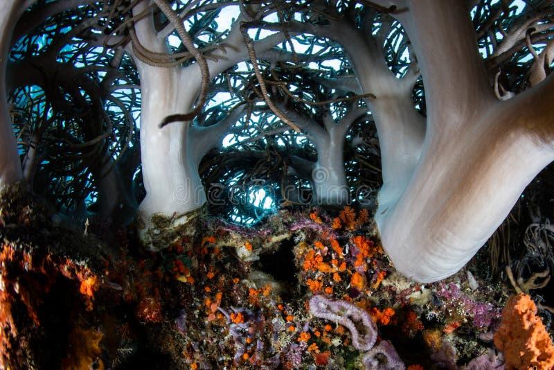 Corales suaves en el filón indonesio foto de archivo libre de regalías