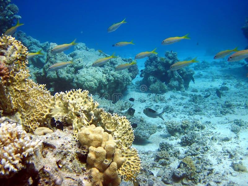 corall鱼礁石 库存照片