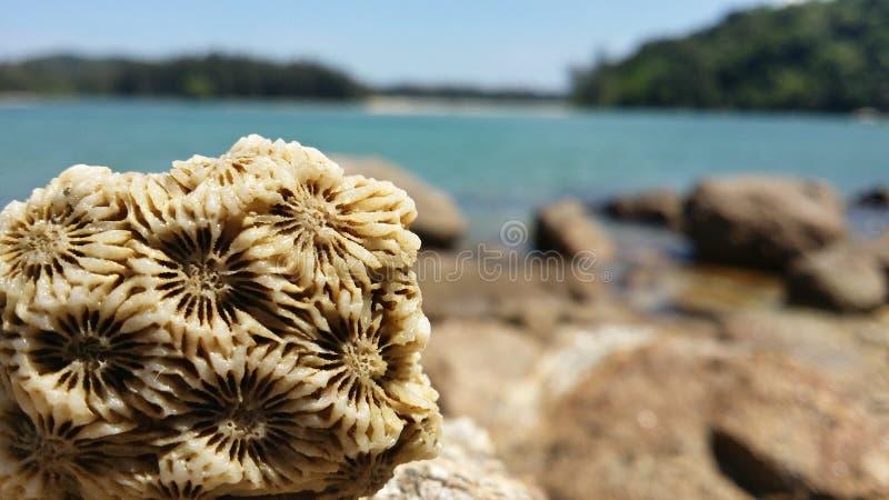 Coralle apedrejado foto de stock royalty free