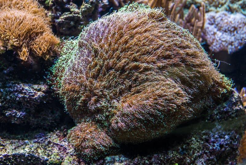 Coralli in acquario fotografie stock libere da diritti
