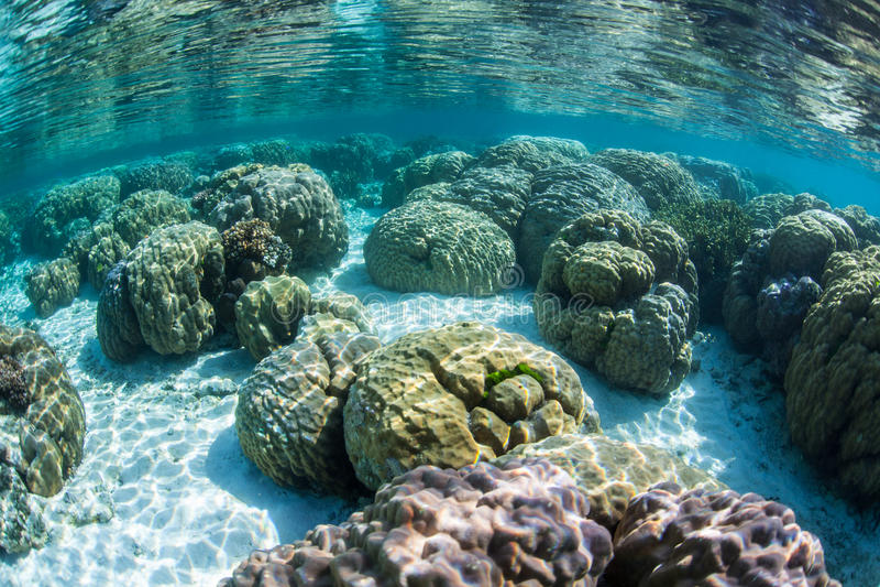Coralli bassi di Boulder fotografia stock