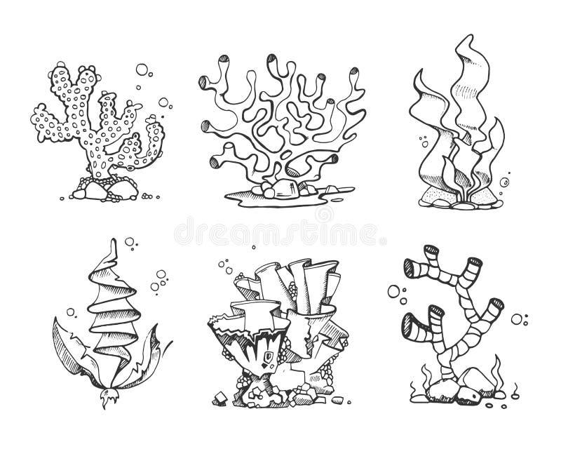 Coralli d'annata ed alghe a disposizione disegnati, scarabocchio, insieme di vettore di stile di schizzo illustrazione vettoriale