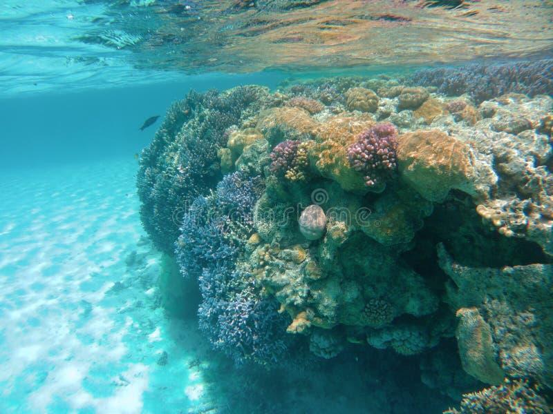 Coralli di Colourfull immagini stock libere da diritti