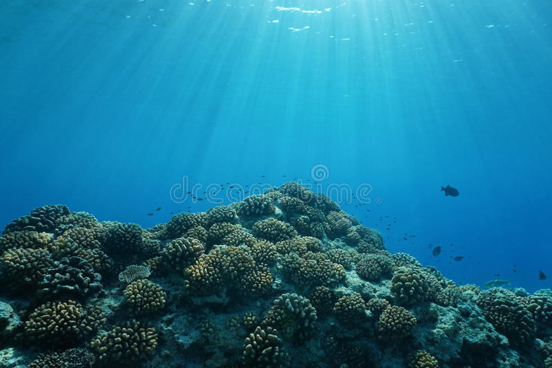 Coralli e pesce subacquei di luce solare dell'oceano Pacifico fotografia stock
