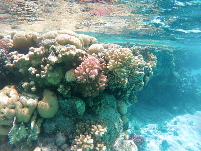 Coralli nel Mar Rosso immagini stock