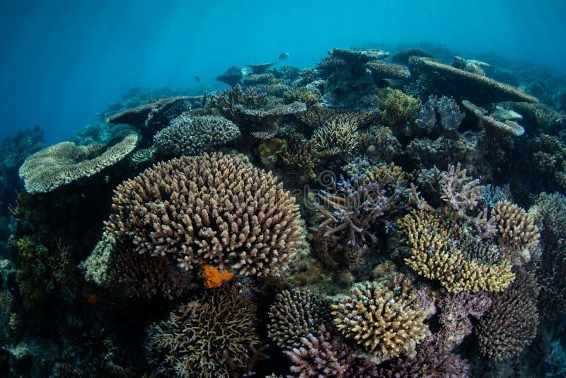 Coralli Scogliera costruzioni in Pacifico Meridionale fotografie stock