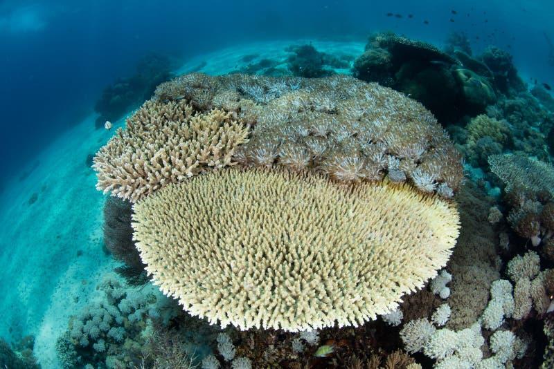 Coralli sulla scogliera bassa fotografia stock