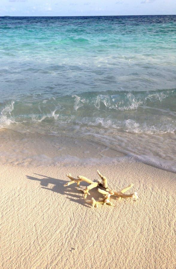Coralli vicino all'oceano blu fotografia stock libera da diritti