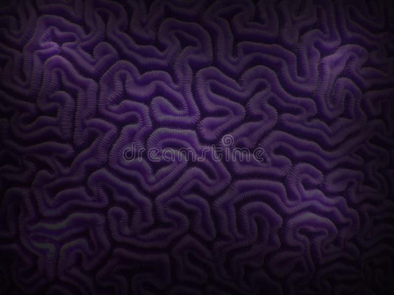 Corallo di cervello viola da Underwater caraibico fotografia stock libera da diritti