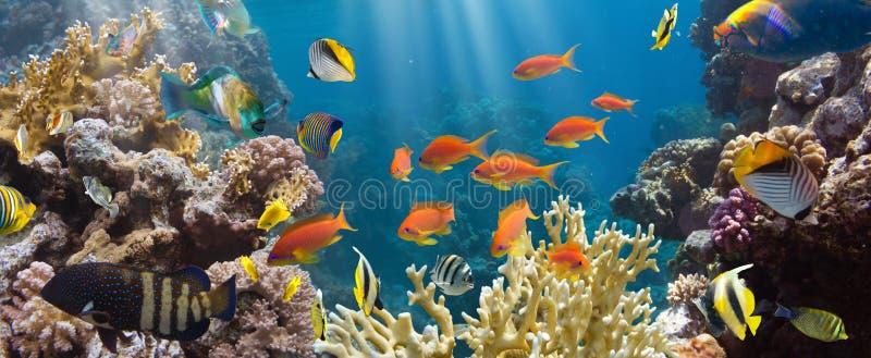 Corallo e pesce fotografie stock libere da diritti