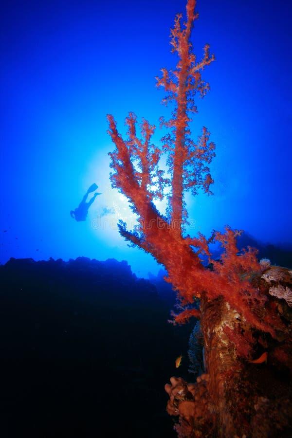 Corallo ed operatori subacquei fotografie stock libere da diritti