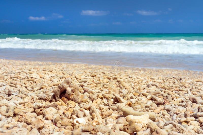 Corallo morto sulla sabbia immagine stock libera da diritti