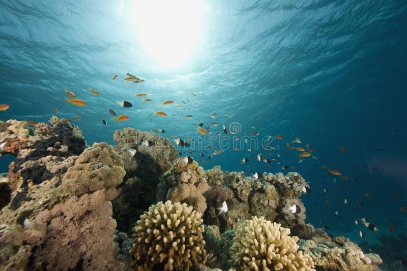 Corallo, oceano e pesci fotografia stock libera da diritti