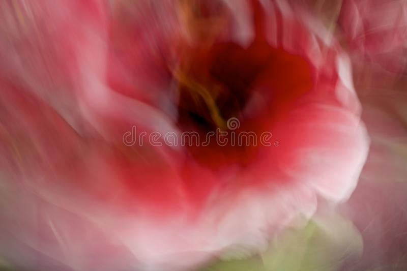 Sognare Fiori Gialli.Corallo Rosso Arancio E Giallo Astratto Fiori Del Tulipano In