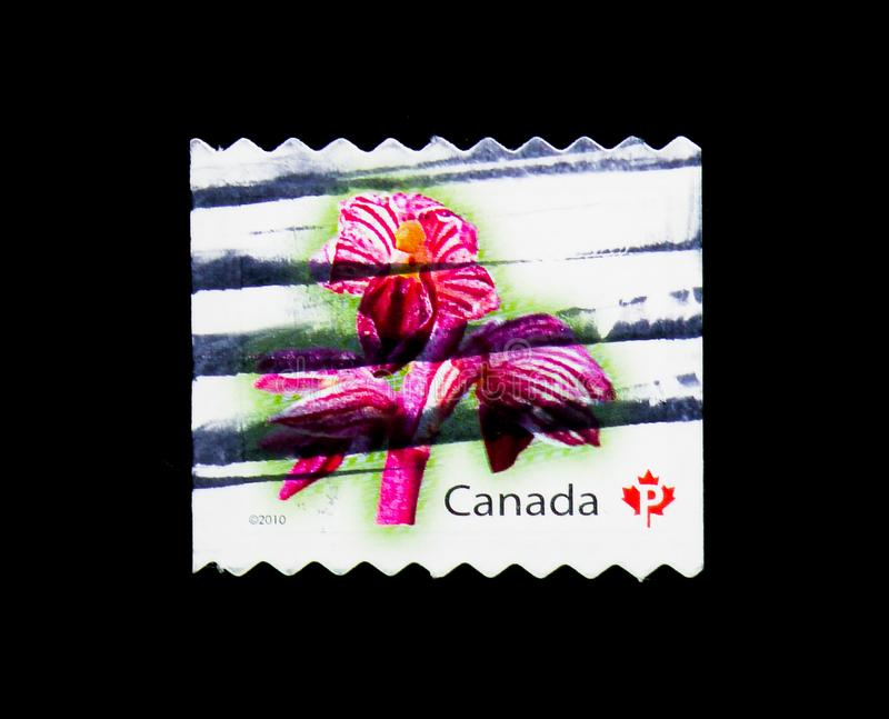 Corallorhiza striata - Striped Coralroot, Flower Definitives (4t. MOSCOW, RUSSIA - MARCH 18, 2018: A stamp printed in Canada shows Corallorhiza striata royalty free stock photos