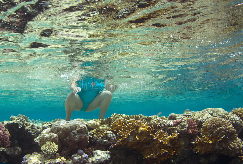 Download Corals stock photo. Image of woman, coral, underwater - 14190804
