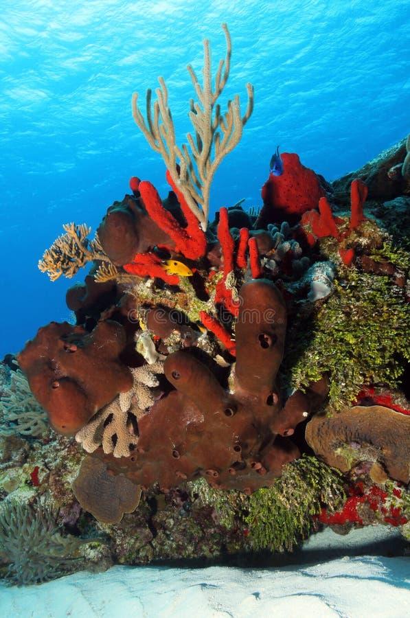 Corals stock photo