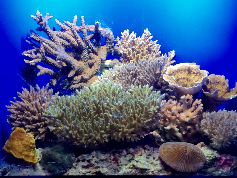 corals fotografie stock libere da diritti