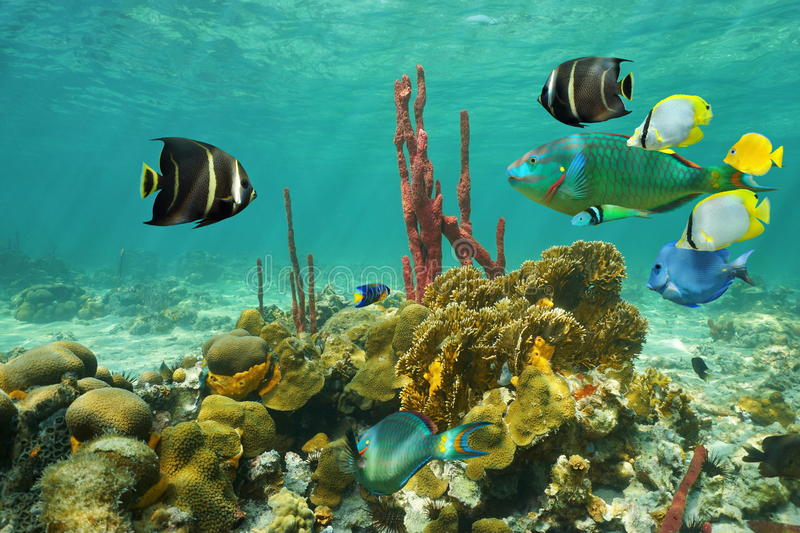Sea Bottom Of The Sea Fish Seabed Sea: Corals And Colorful Tropical Fish Under The Water Stock